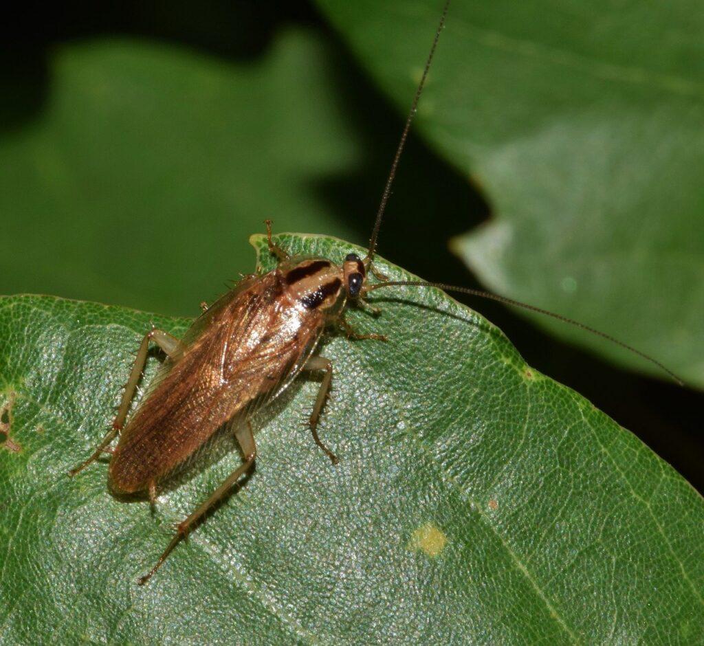 סוגי חרקים